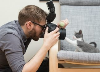 Tips for taking pictures of wonderful moments of your cat like a PRO