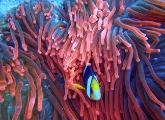 Best Marine Biology Universities in the US